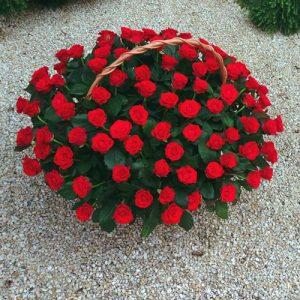101 красная роза в корзине Николаев