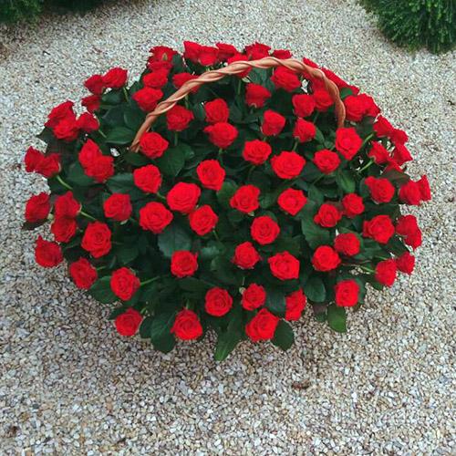 101 красная роза в корзине с доставкой в Николаеве