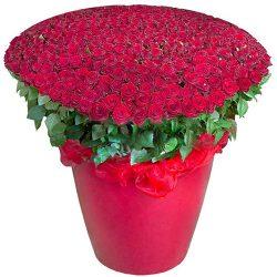 301 красная роза в большом вазоне фото