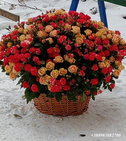 101 кустовая роза в корзине фото
